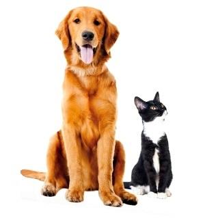 Dla psa i kota